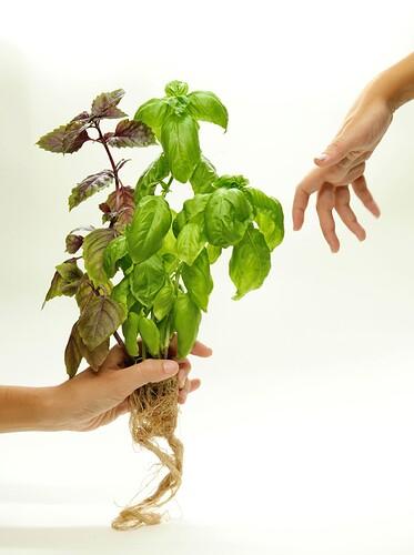 Plants artsy pic